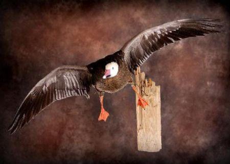 19 Goose