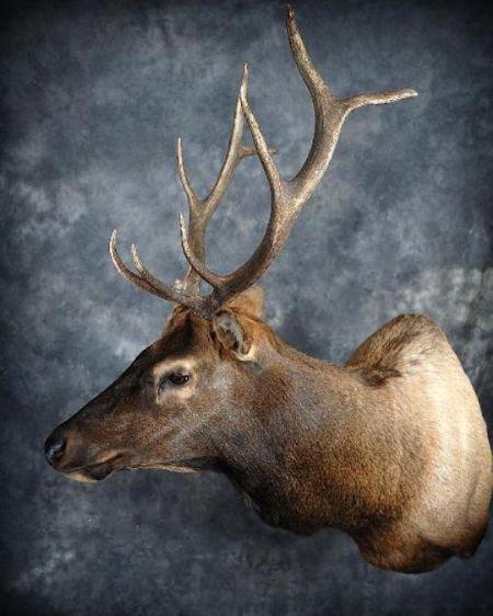 35 Elk