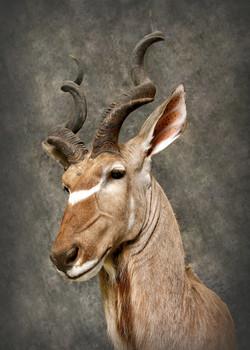 21 Kudu