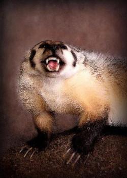 166-badger