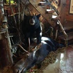 17 Bear and Moose | Custom