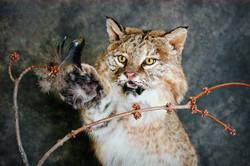 12 Bobcat