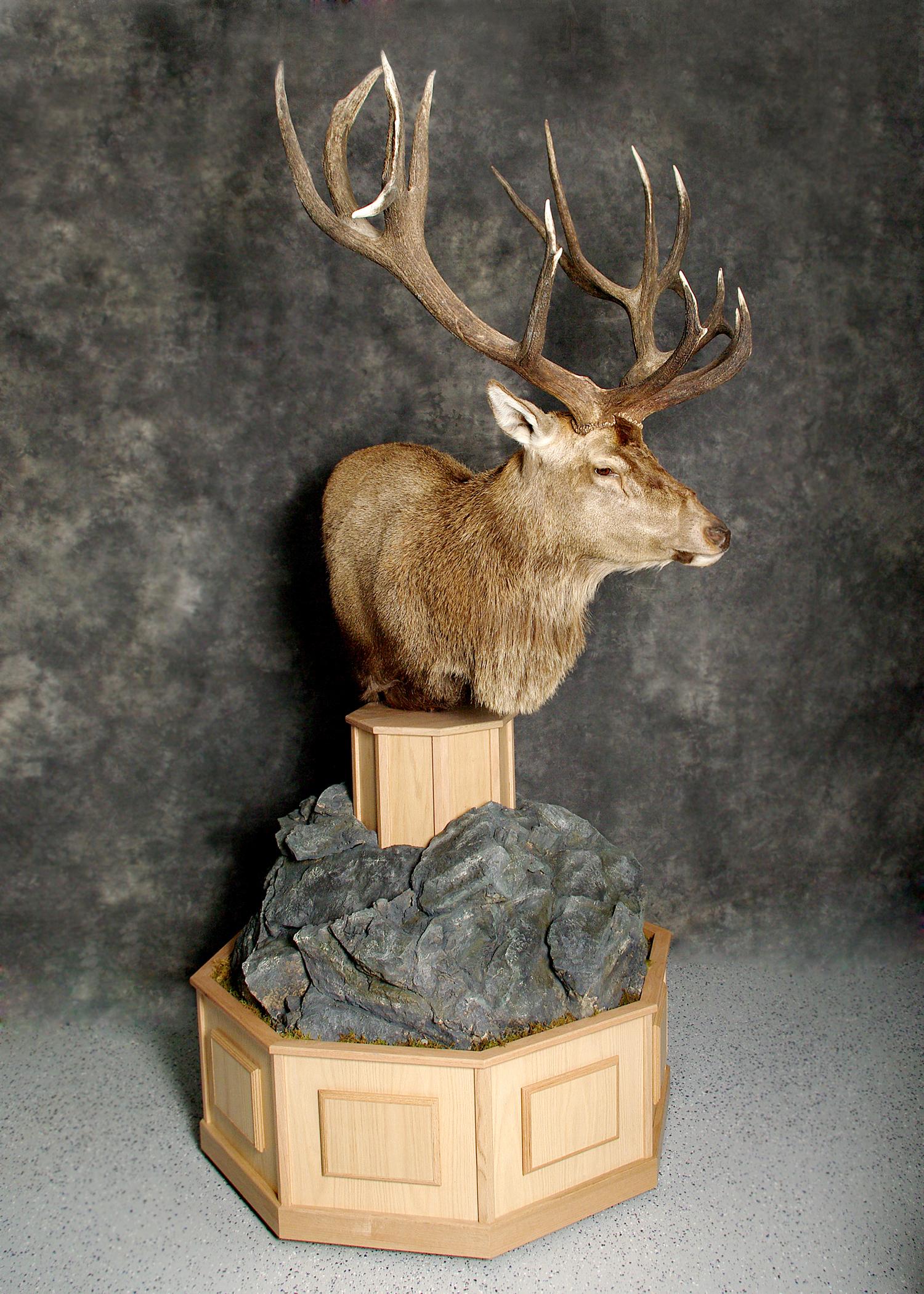 3 Elk
