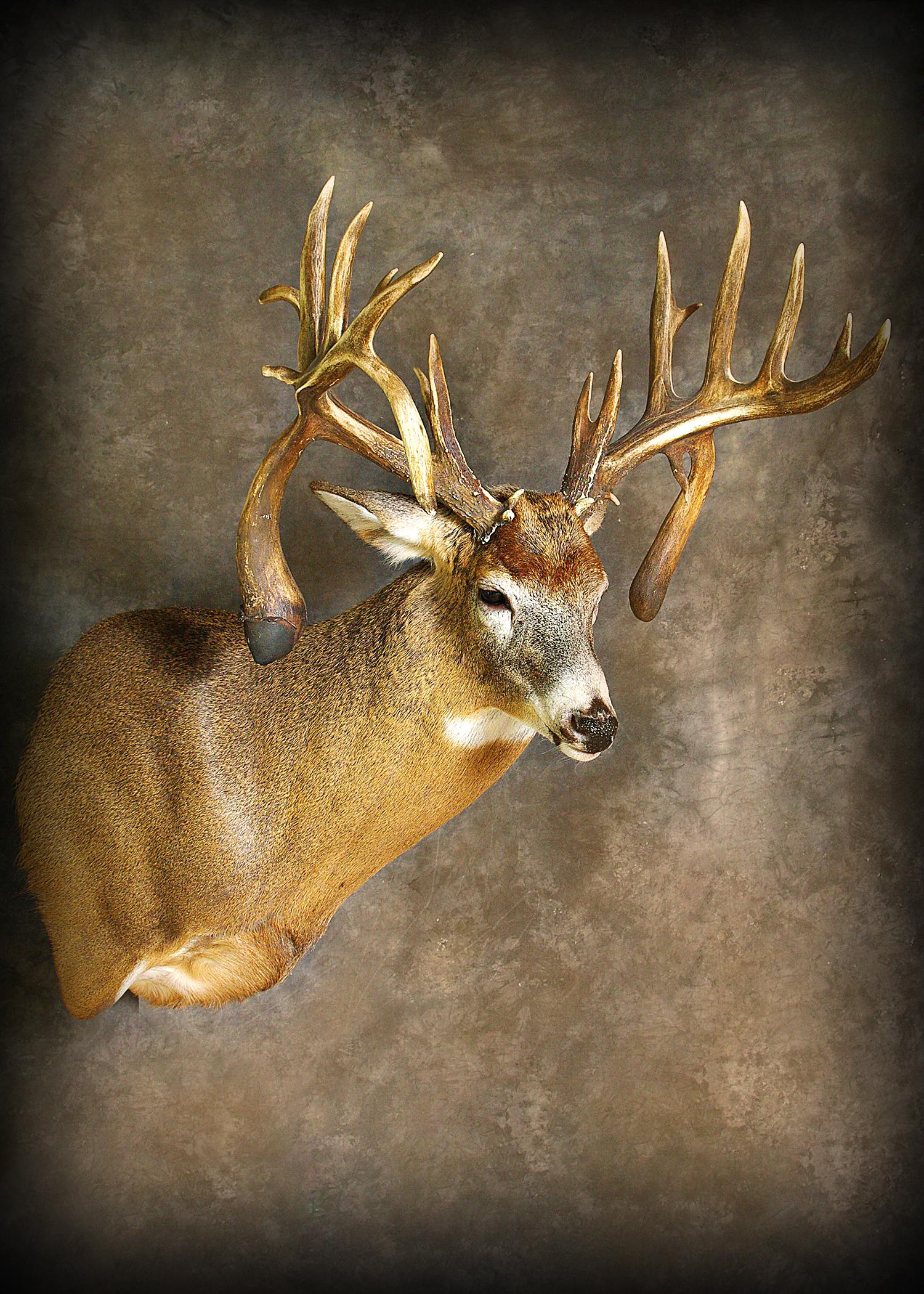 15 Double Droptine Buck