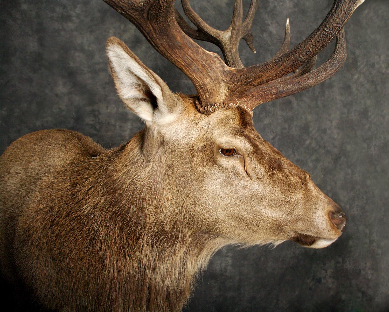 4 Elk