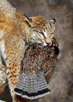 3 Bobcat | Grouse