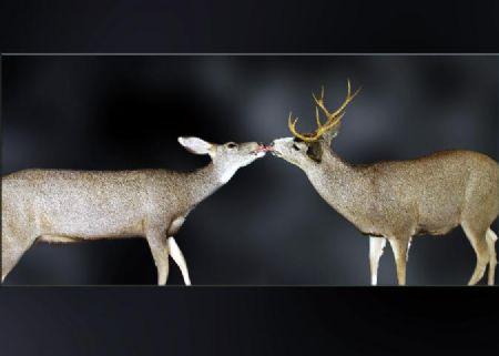 39 Doe | Buck