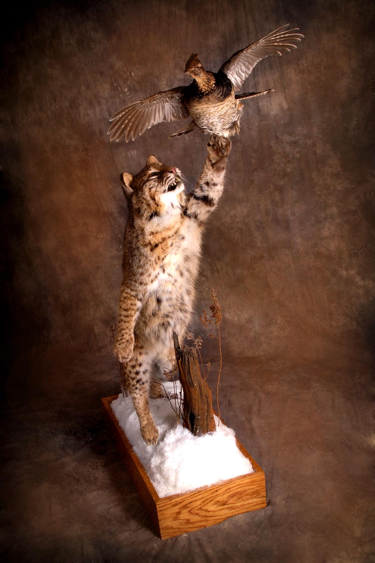 26 Bobcat | Grouse