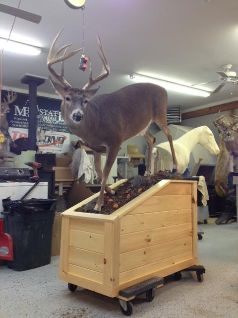 15 Lifesize Whitetail