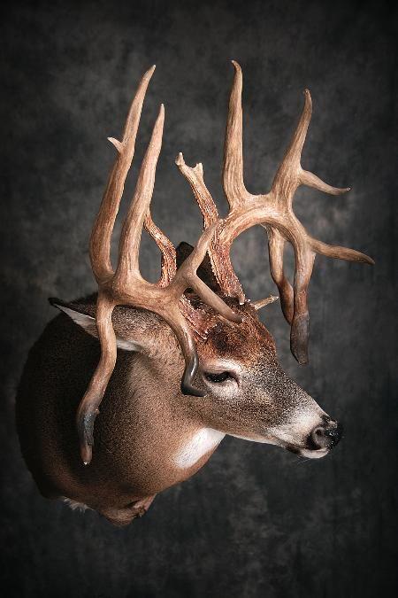 54 Deer-Name to come