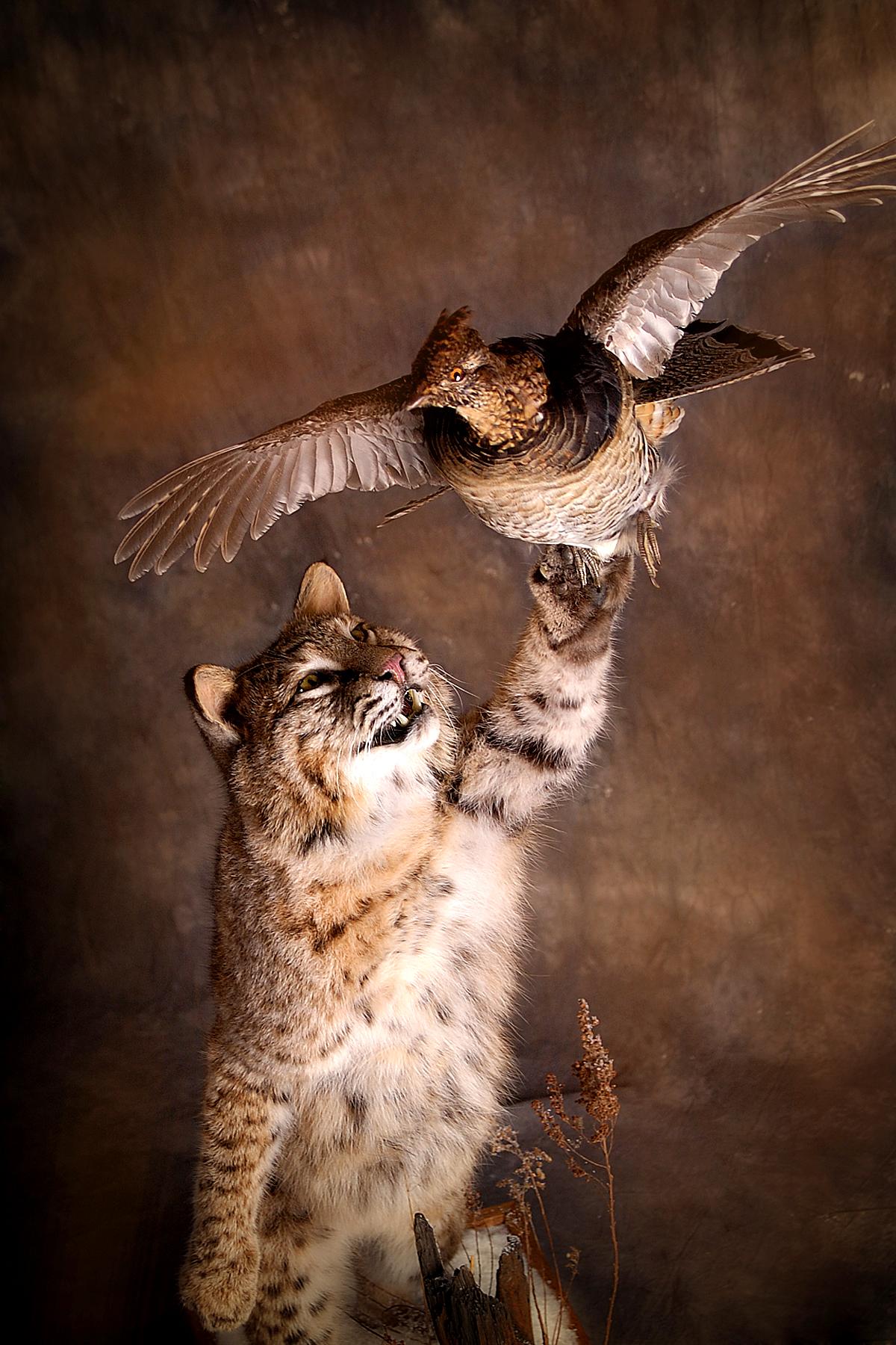 27 Bobcat | Grouse