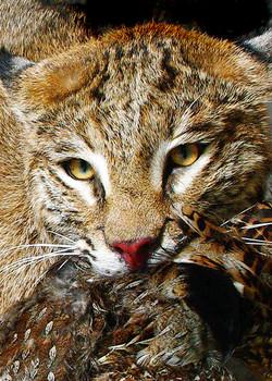 4 Bobcat | Grouse