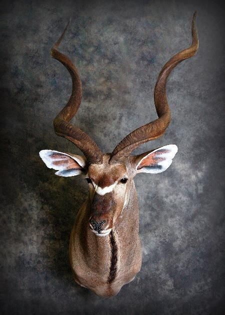 15 Kudu