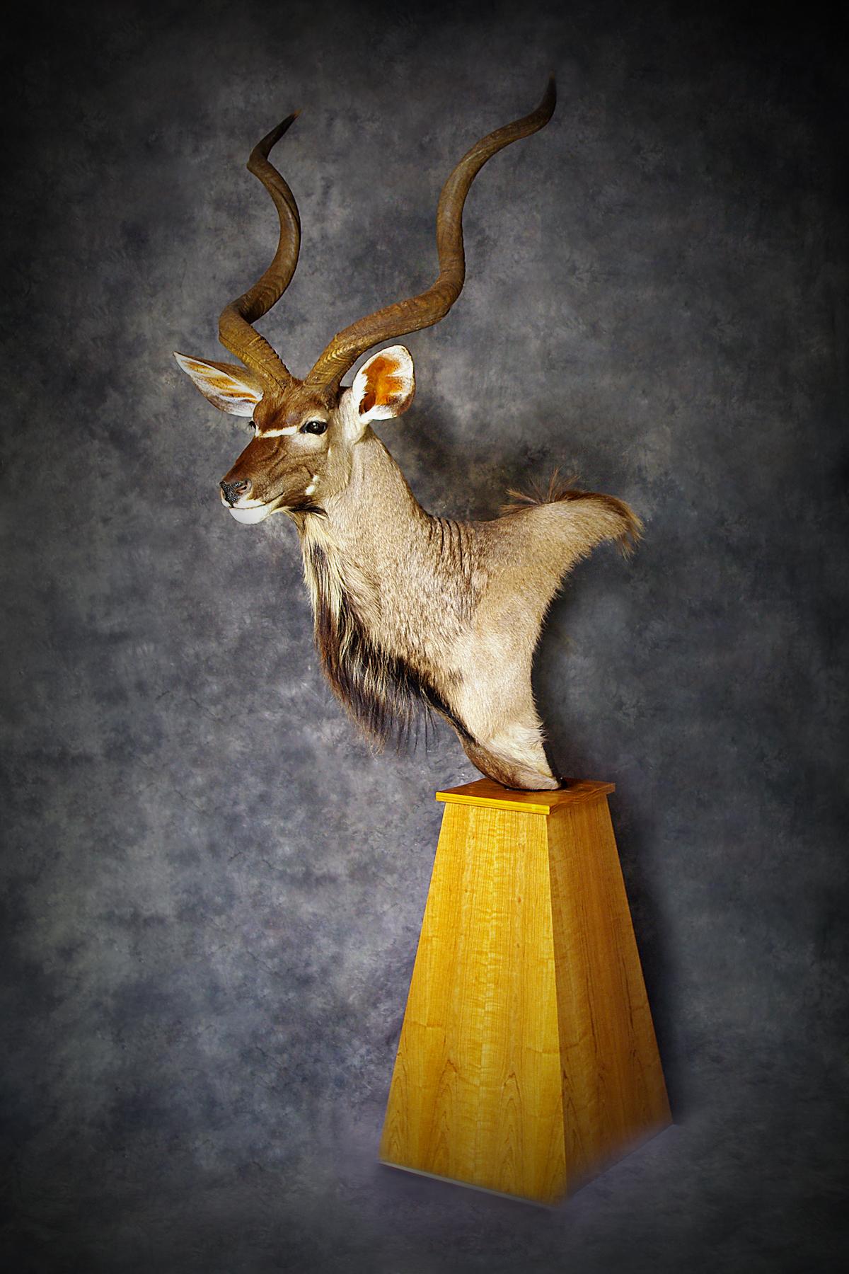 24 Kudu