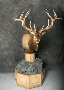 9 Elk
