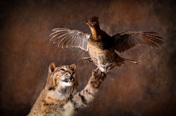 28 Bobcat | Grouse