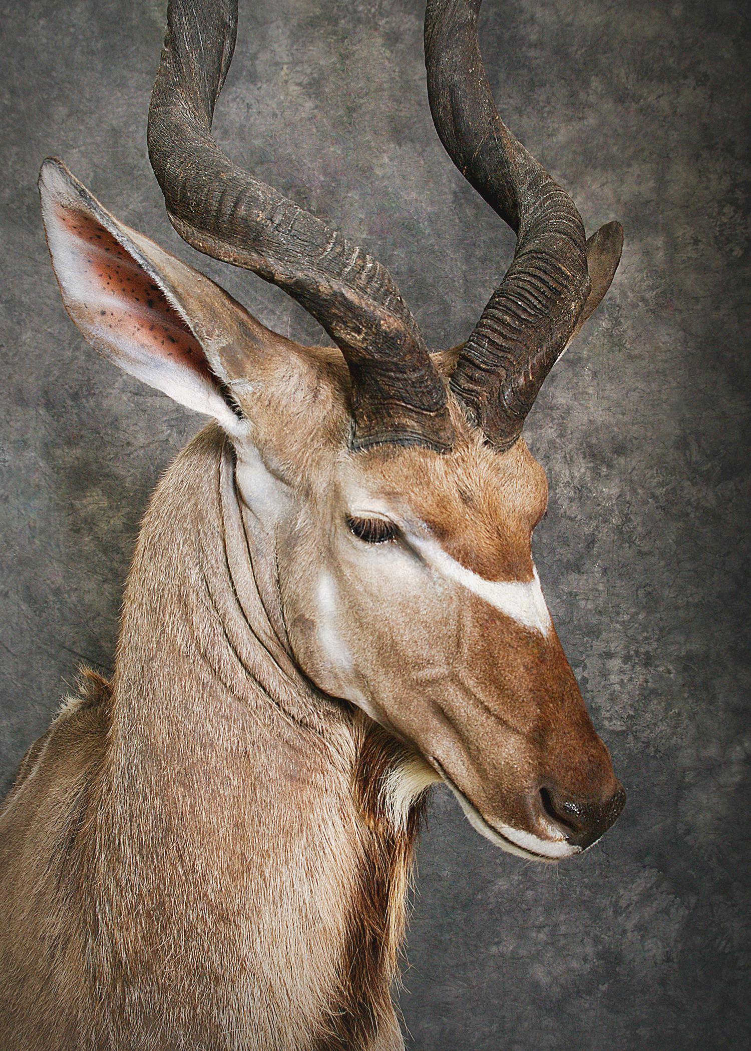 40 Kudu