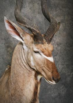 23 Kudu