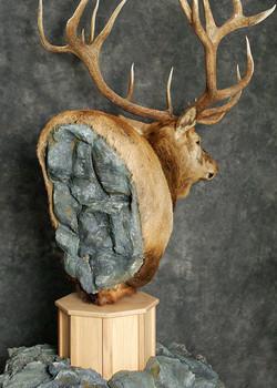 5 Elk
