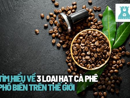 Tìm hiểu về 3 loại hạt cà phê phổ biến nhất thế giới!