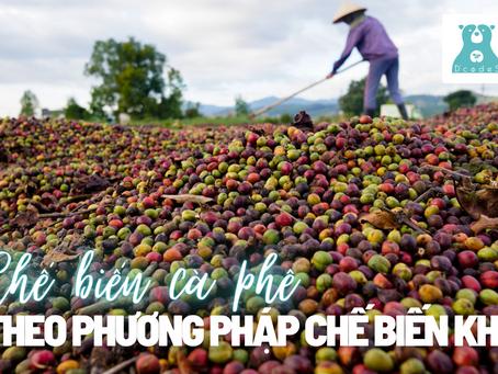 Quy trình sản xuất cà phê theo phương pháp chế biến khô