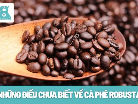 Những điều chưa biết về cà phê   Robusta