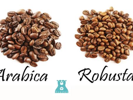 Sự khác biệt giữa cà phê Arabica và cà phê Robusta