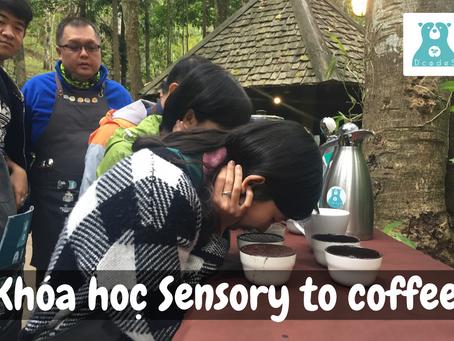 Khóa học Sensory to Coffee tại D'codeS