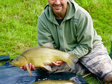Tench on the feed...