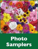 renees garden photo-samplers..webp.jpeg