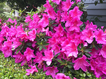 June Garden Guide
