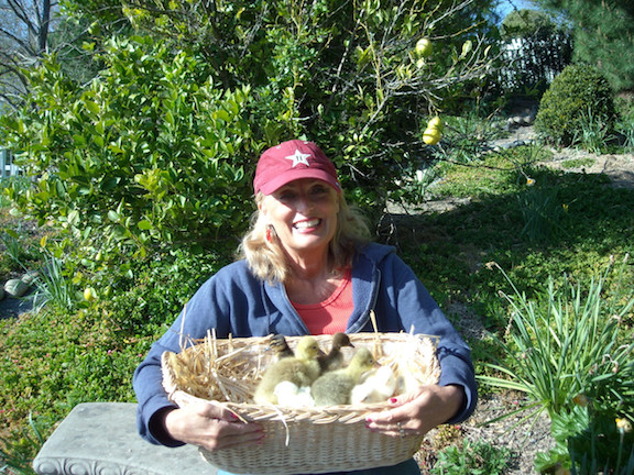 Cynthia Brian with baby chicks and geese