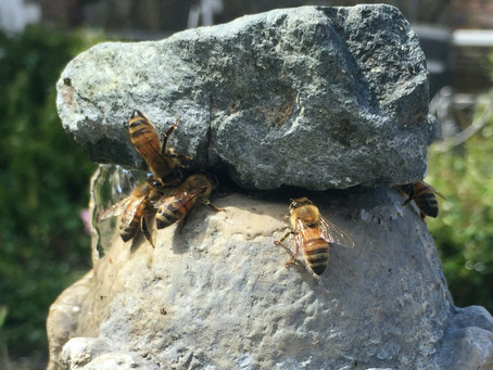 Bastille Day, Bee Thoughtful, July Gardening