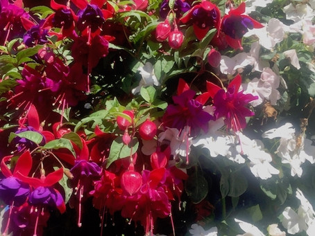 Hanging Baskets, Home Noise Alerts, DIY Security Systems