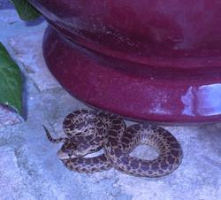 Snake on Porch