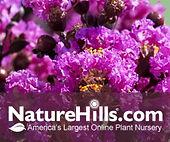 Nature Hills flower logo.jpg