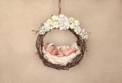Shropshire Newborn