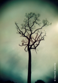 L'ARBRE Photography
