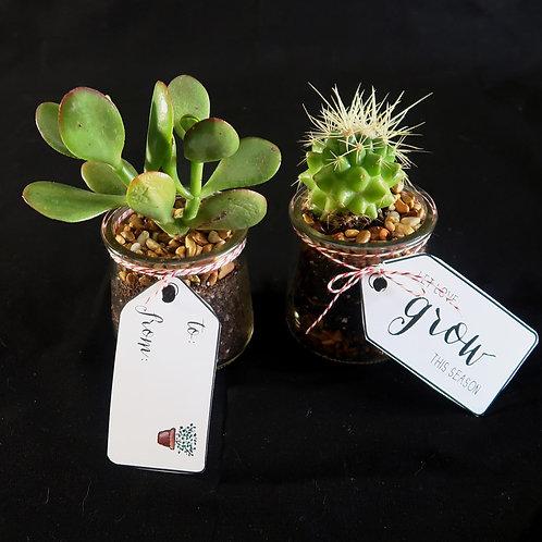 Plant, Succulent or Cactus