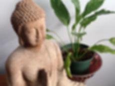 Buddha & Herbal plant