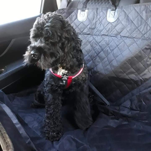 Max in the Car