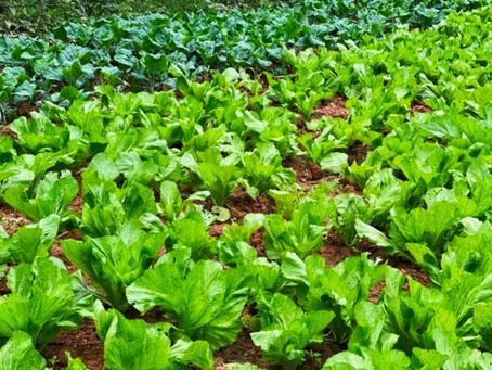 Beauty of Biodynamic Farming