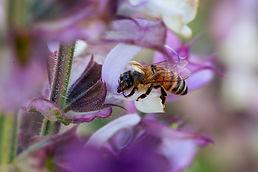 RGB Sage Harvest France_Provence 46-scr.