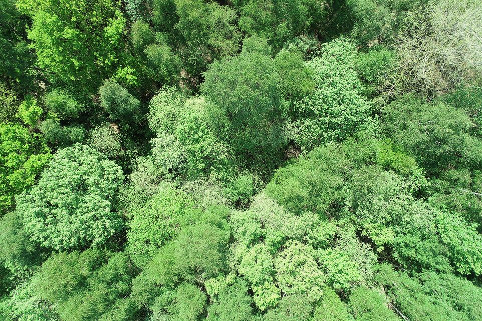 Hospital plantation Drone pic(1).JPG