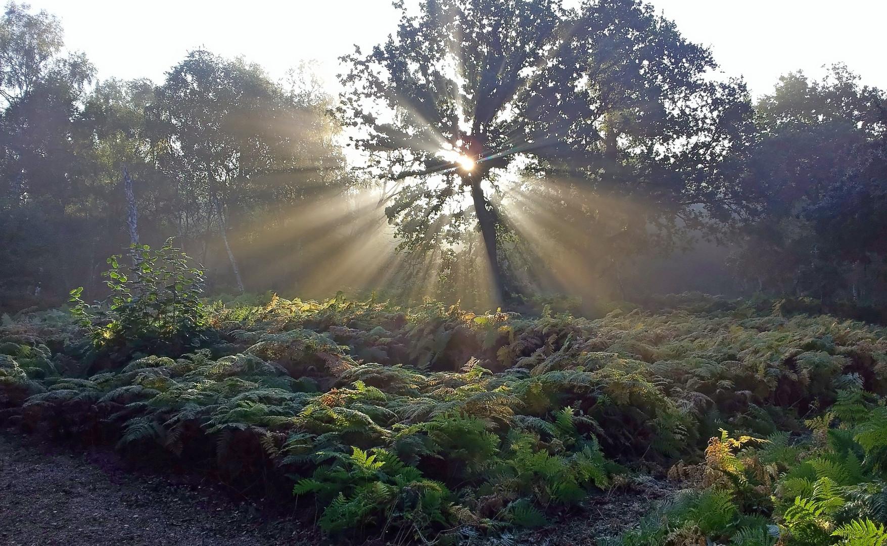 Woodland .jpg