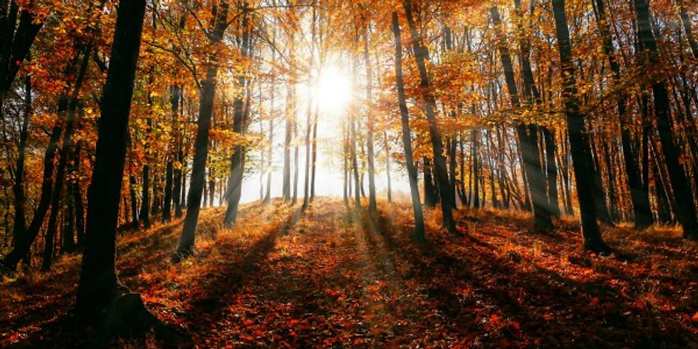Autumn Equinox Retreat: A Soulful Harvest