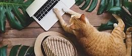 chat au bureau.jpg