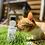 Thumbnail: Jeux à bulles parfum herbe à chats
