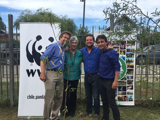 WWF realizó plantación de árboles en Escuela Claudio Matte