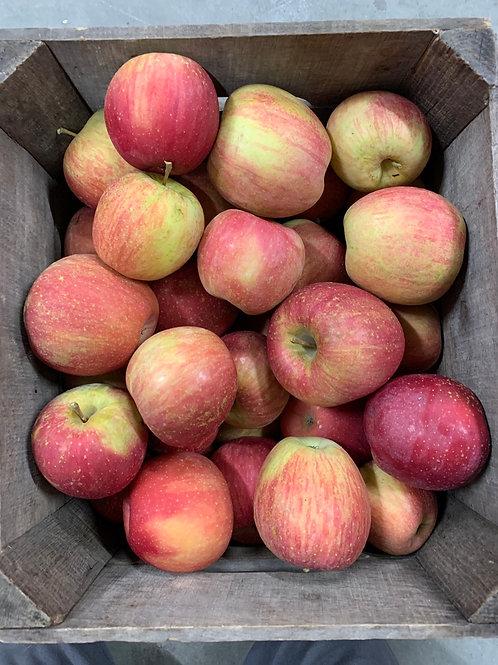 Apples: Aztec Fuji (1/2bu)